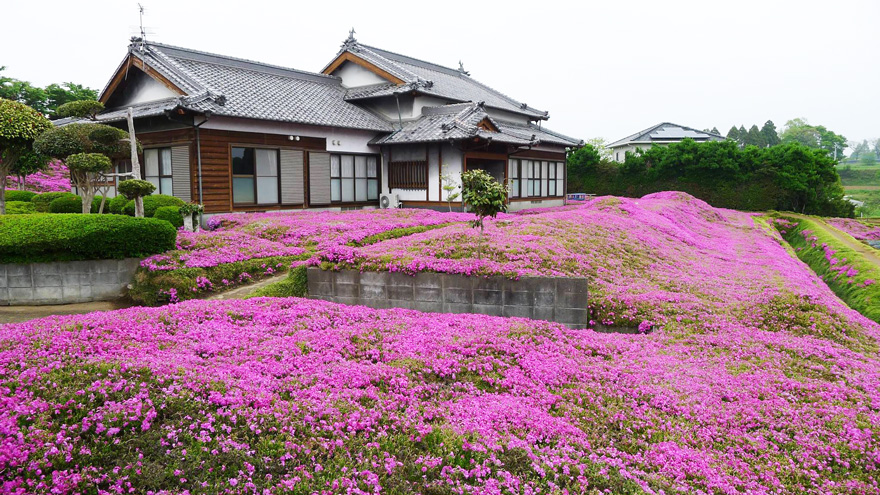 marido-planta-flores-esposa-ciega-kuroki-japon (4)