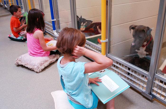 Estos niños practican la lectura para calmar a los perros más temerosos del refugio