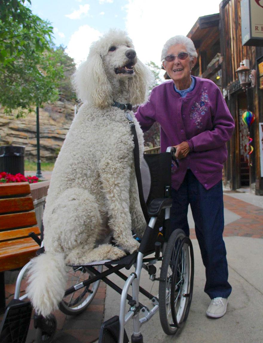 anciana-90-cancer-viaje-carretera-caniche-ringo (6)