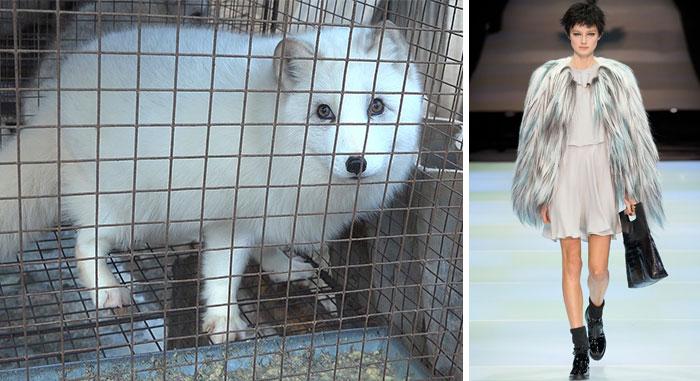 Armani anuncia que dejará de usar pieles de animales de ahora en adelante