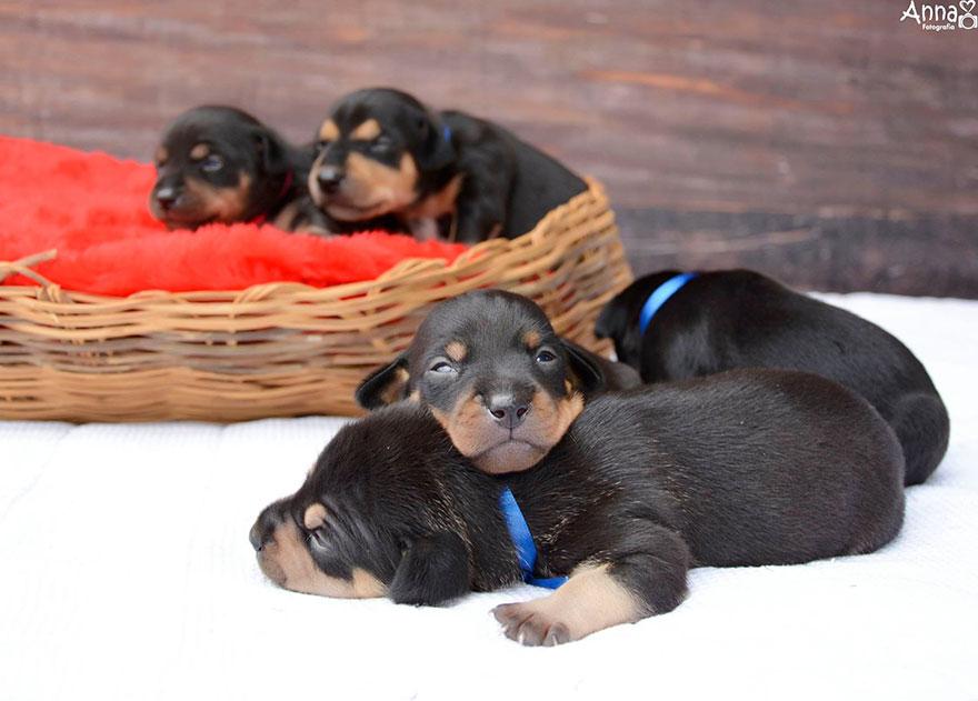 fotos-cachorros-perro-lilica-ana-paula-grillo (1)