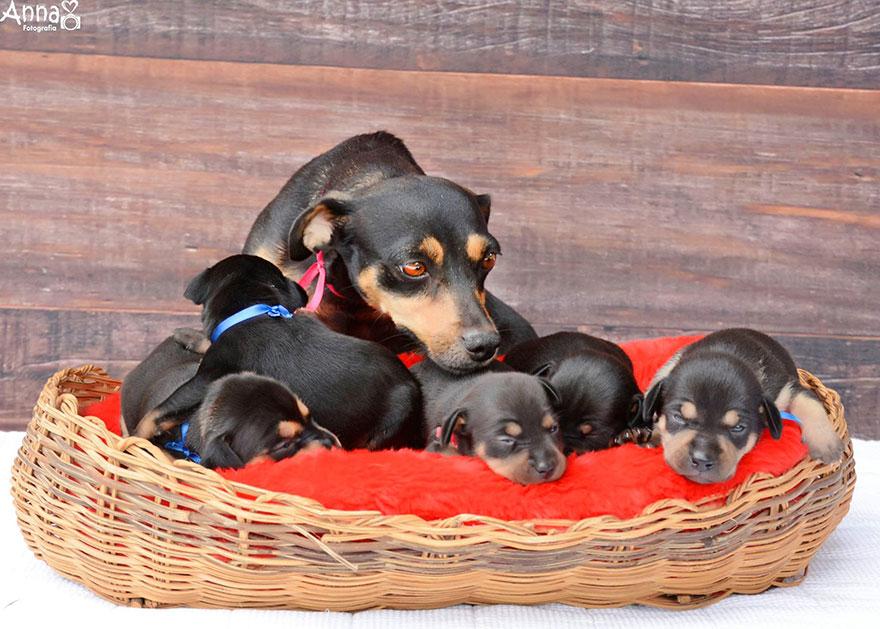 fotos-cachorros-perro-lilica-ana-paula-grillo (10)