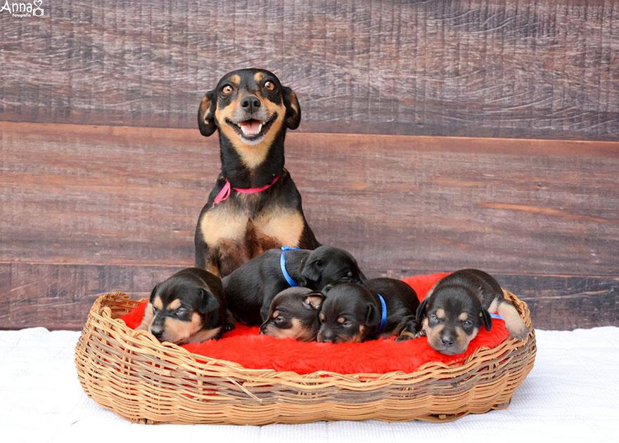fotos-cachorros-perro-lilica-ana-paula-grillo (3)