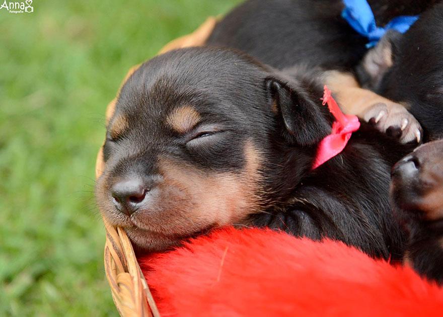 fotos-cachorros-perro-lilica-ana-paula-grillo (5)