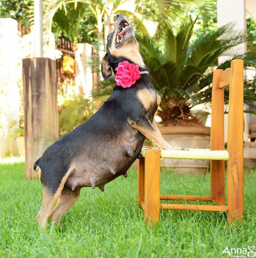 fotos-cachorros-perro-lilica-ana-paula-grillo (8)