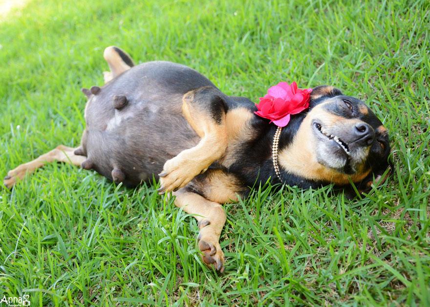 fotos-embarazo-perro-lilica-ana-paula-grillo (4)