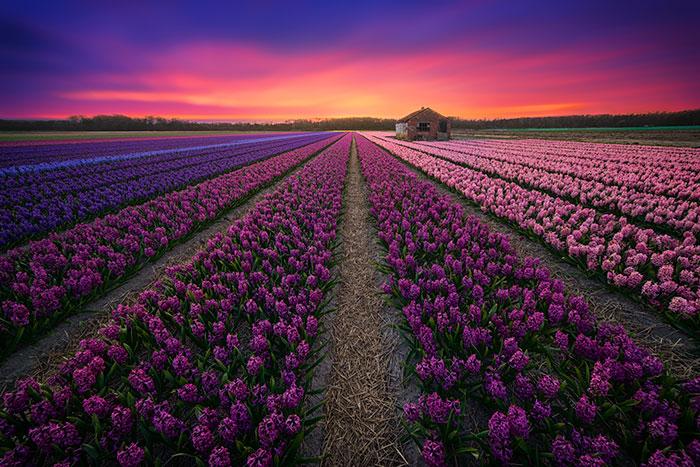 20 Razones para visitar Holanda, mi país natal