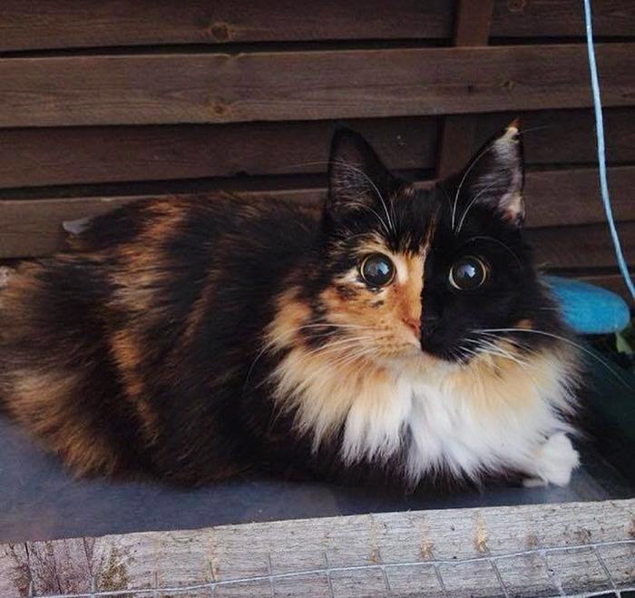 gato-ciego-quimera-adoptado-jasmine-sandra-coudray (10)