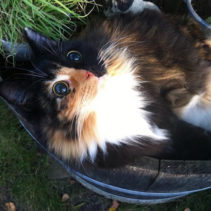 gato-ciego-quimera-adoptado-jasmine-sandra-coudray (3)