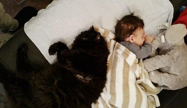 Este gato ha sido el guardián de su pequeño humano desde antes de que naciera