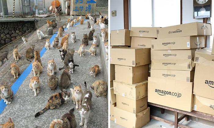 La isla de los gatos en Japón pide comida a internet y recibe más de la que puede almacenar
