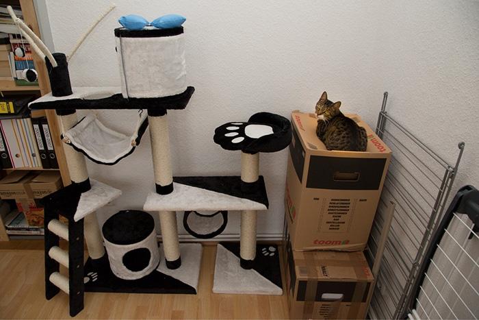 20 Fotos de gatos usando sus regalos cuidadosamente elegidos