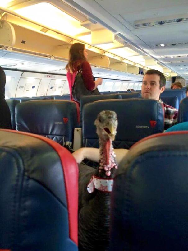 pasajeros-avion-maleducados (12)