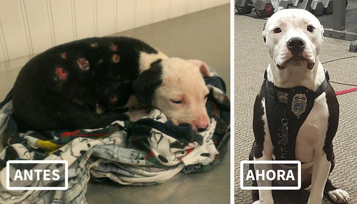 Un perro rescatado de un incendio se convierte en bombero