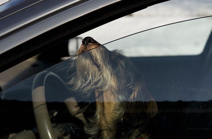 salvar-animales-encerrados-coches-florida (1)
