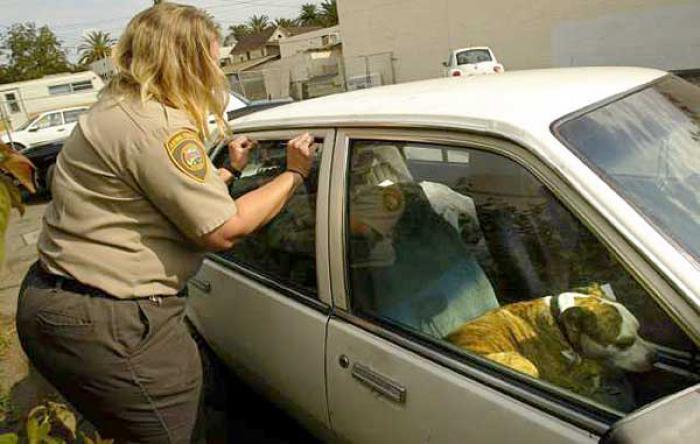 salvar-animales-encerrados-coches-florida (2)