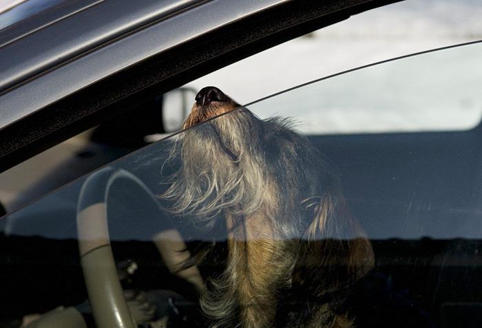 En Florida ahora es legal romper las ventanas de los coches para salvar mascotas
