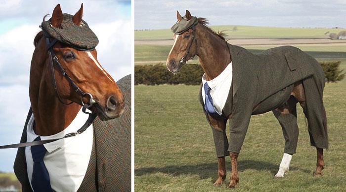 Este caballo recibe un traje hecho a medida y tiene un aspecto absolutamente elegante con él