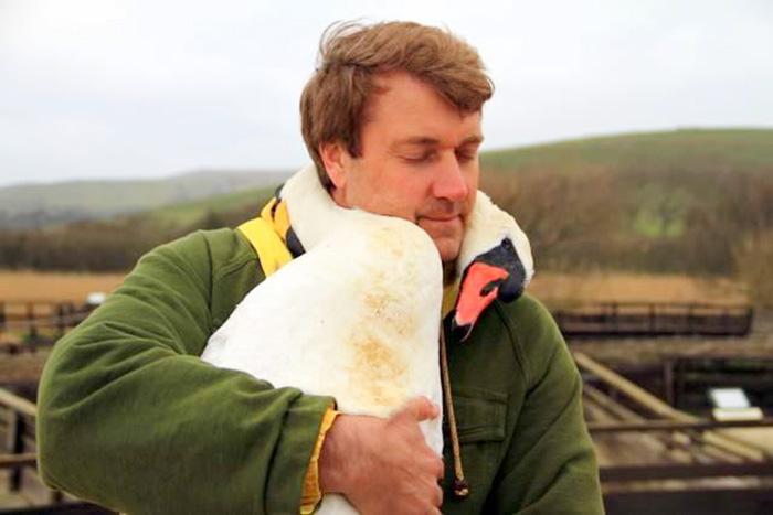 Este cisne abraza con su cuello al hombre que lo rescató