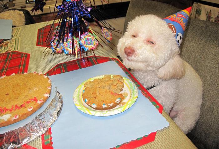 20 Animales celebrando su cumpleaños mejor que tú