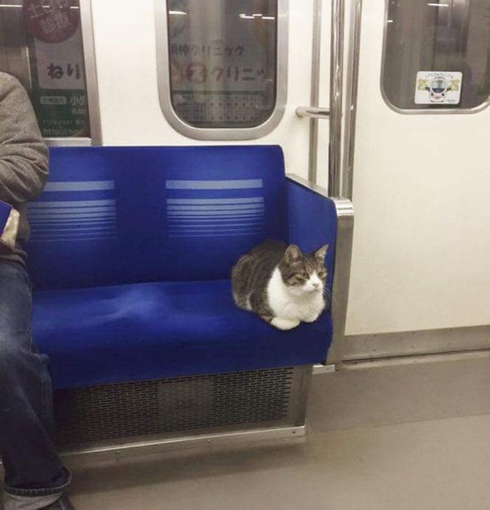 Este gato coge el metro en Tokyo regularmente él solito