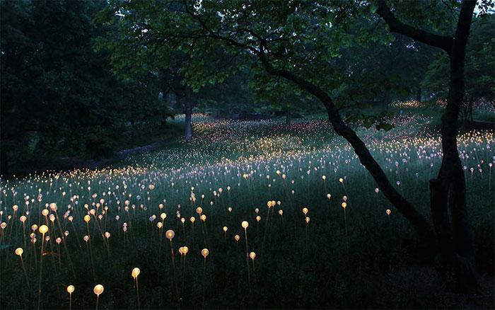 Campo de Luz: Este artista usa 50000 luces para convertir el desierto en un cuento de hadas