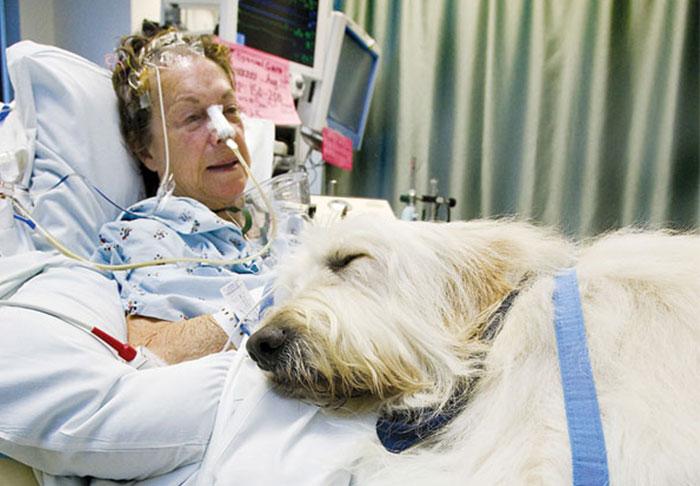 Este hospital permite que las mascotas visiten a sus humanos enfermos para que se sientan mejor