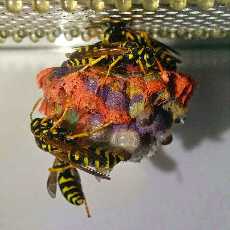 nidos-avispa-cartonera-colores-mattia-menchetti (2)
