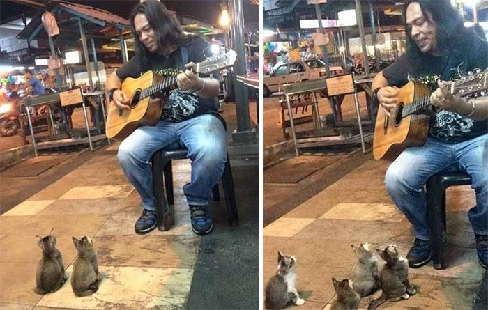 4 Gatitos melómanos escuchan a un músico callejero a quien los demás ignoraban