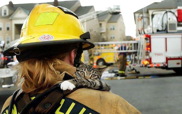 bomberos-salvando-animales (1)