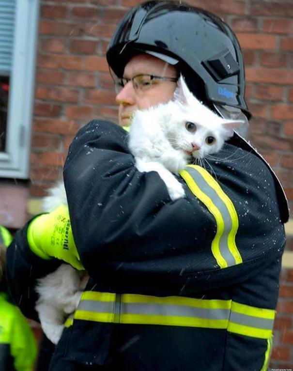 bomberos-salvando-animales (10)