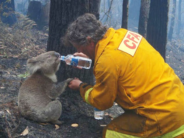 bomberos-salvando-animales (11)
