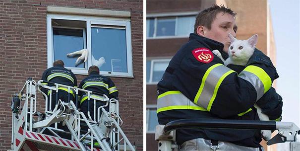 bomberos-salvando-animales (13)