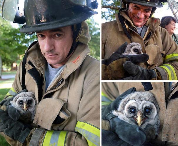 bomberos-salvando-animales (3)