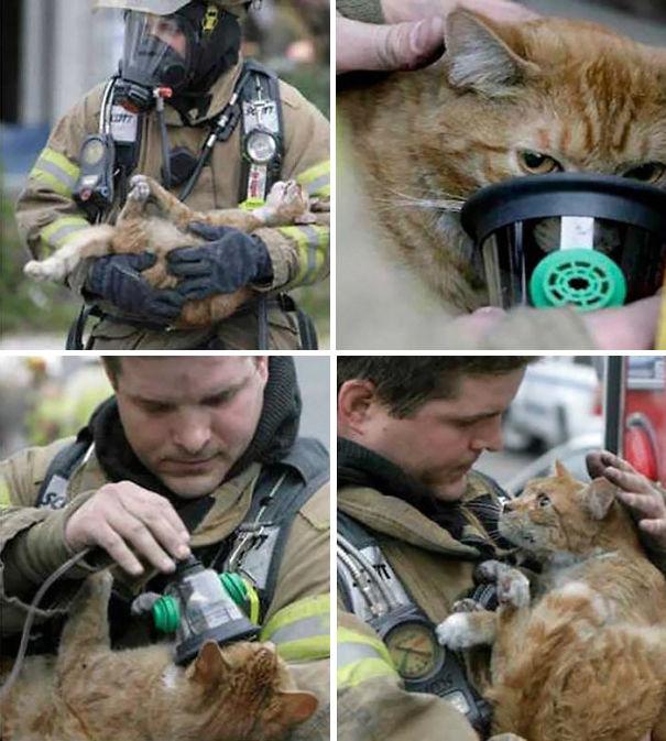 bomberos-salvando-animales (4)