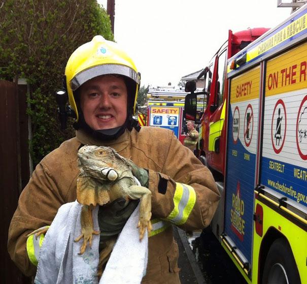 bomberos-salvando-animales (9)