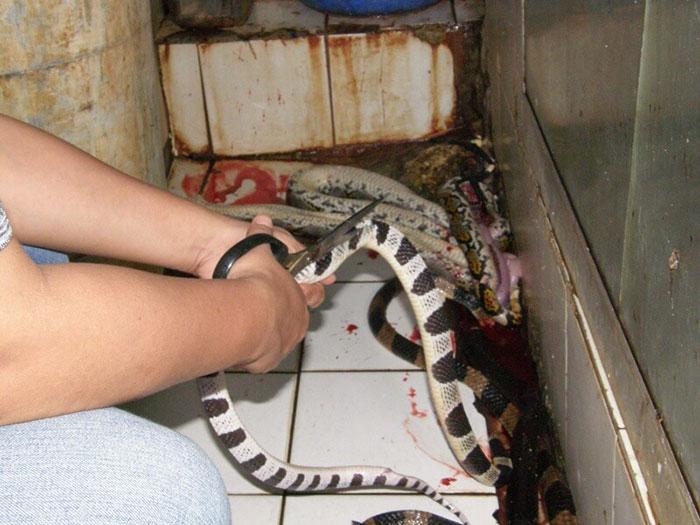 campana-anti-crueldad-animal-cuero-peta-asia (9)