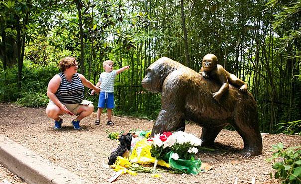 gorila-harambe-disparado-accidente-nino-zoo-cincinnati (4)