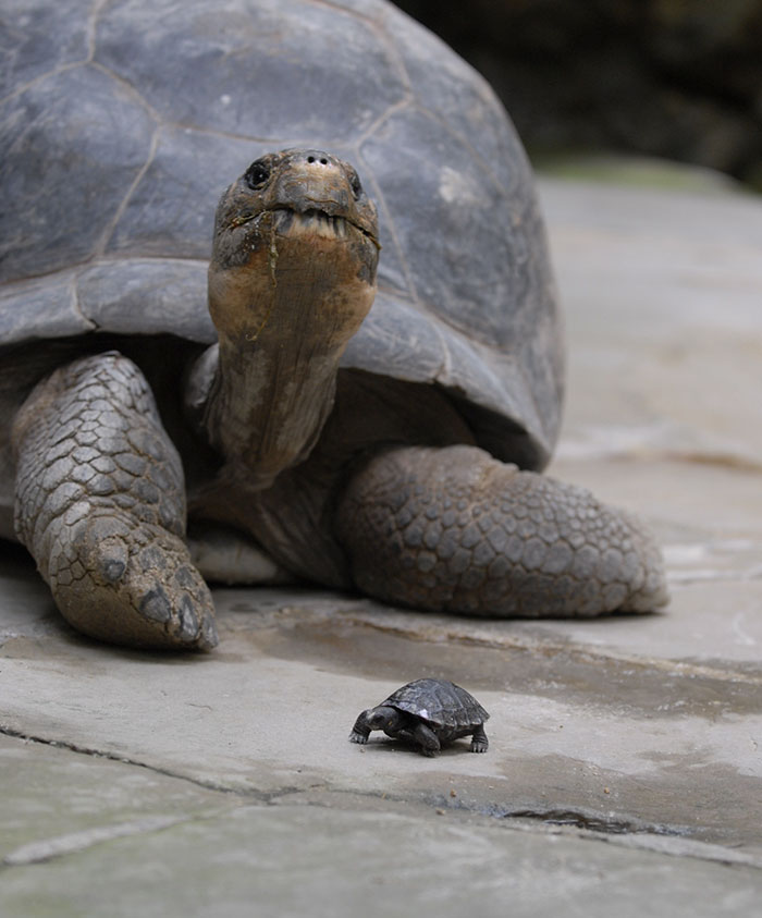 madre-galapago-80-anos-zoo-zurich (2)