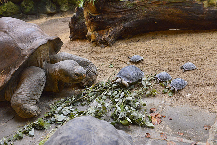 madre-galapago-80-anos-zoo-zurich (5)