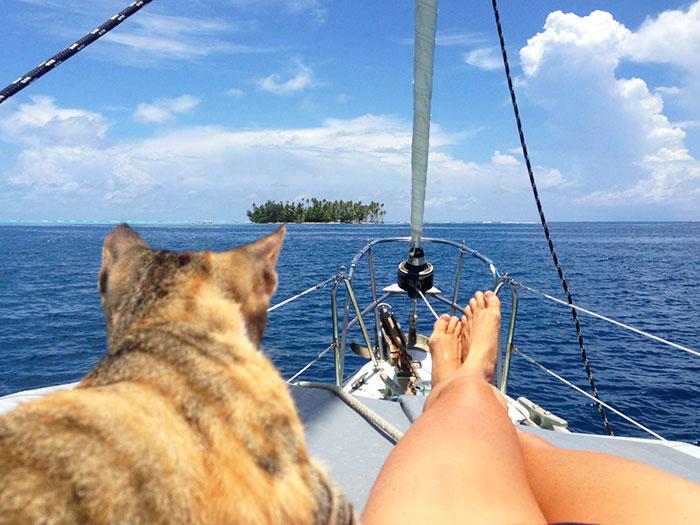 navegar-mundo-barco-gato-amelia-liz-clark (11)