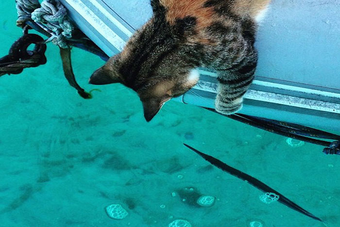 navegar-mundo-barco-gato-amelia-liz-clark (12)