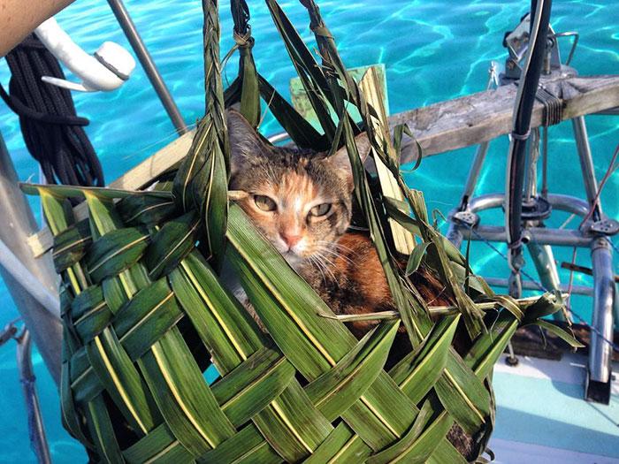 navegar-mundo-barco-gato-amelia-liz-clark (18)