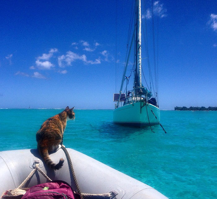 navegar-mundo-barco-gato-amelia-liz-clark (4)
