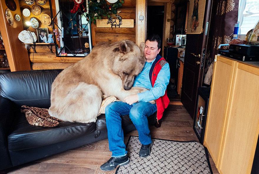 oso-adoptado-stepan-familia-rusa (6)