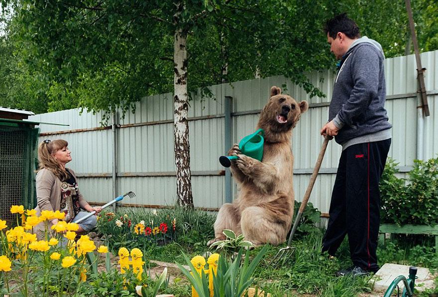 Esta pareja rusa adoptó un oso huérfano hace 23 años y aún viven juntos