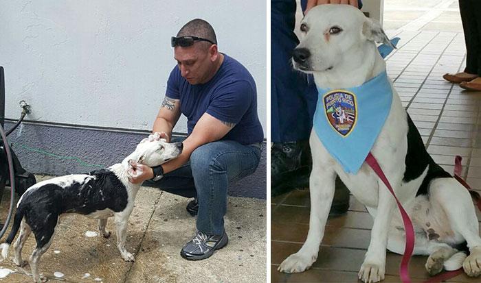 Un perro callejero entra en una comisaría de Puerto Rico y consigue trabajo