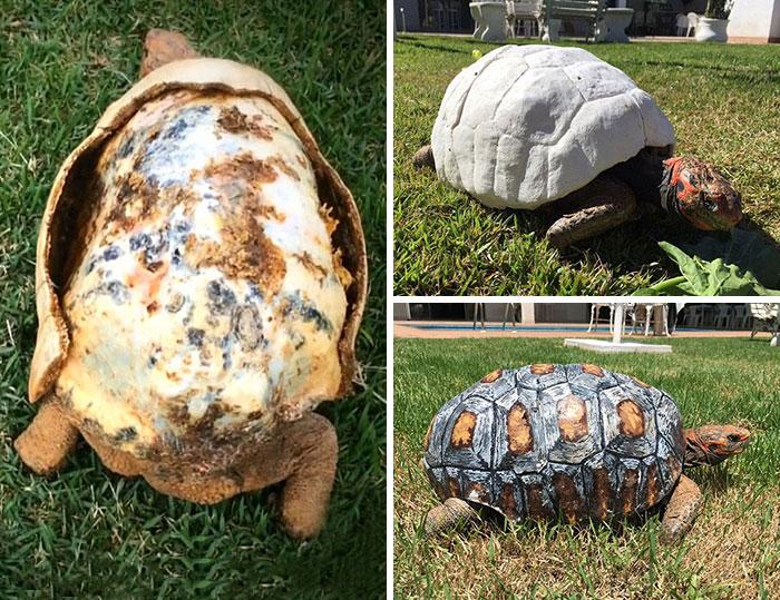 Esta tortuga malherida recibió el primer caparazón del mundo impreso en 3D