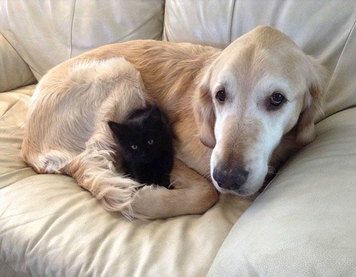 Este perro perdió a su compañero gato a causa del cáncer, así que le buscaron un nuevo amigo