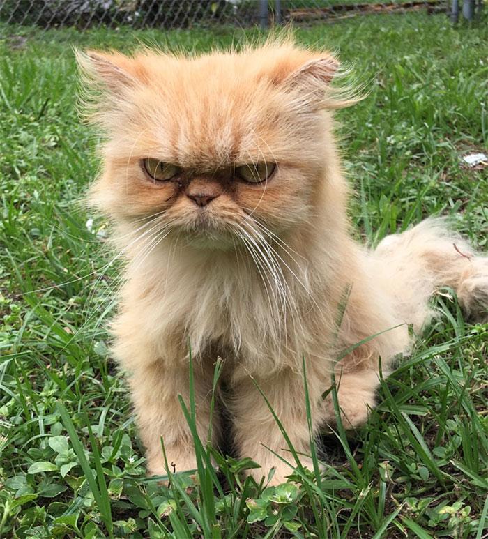 Un gato gruñón abandonado, encontrado durante la inspección de una casa, fue adoptado y lo odia